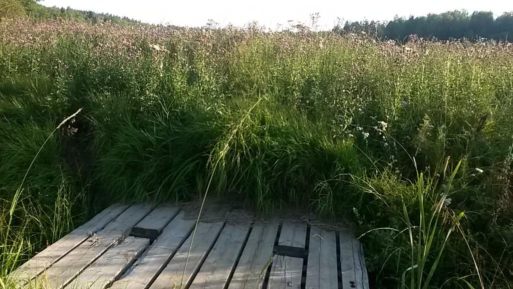 I våras var den en lättsprungen äng nu över 1 meter med gräs, tistlar, brännässlor, fästingar och annat....