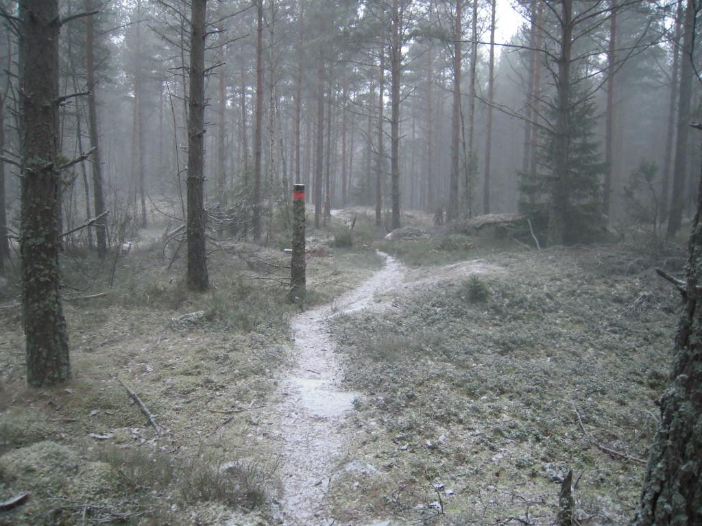 Fin och inbjudande skog.