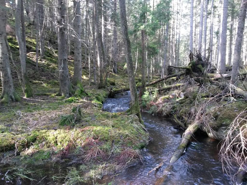 Vacker bäck nere i reservatet