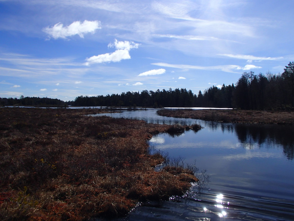 Våtmarken Bruksdammen vid Hälleforsnäs.