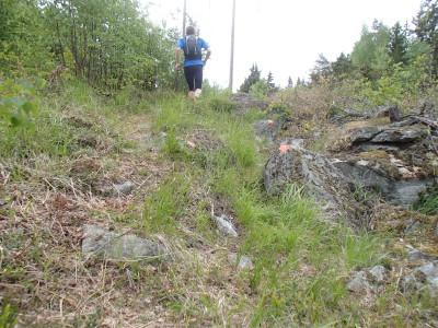 Många oranga duttar på sten strax före Skerike.