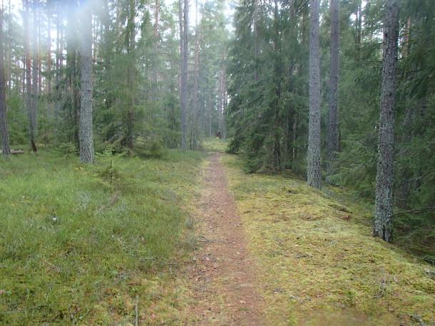 Tillbaka i skogen någon mil norrut. Fortfarande på Badelundaåsen